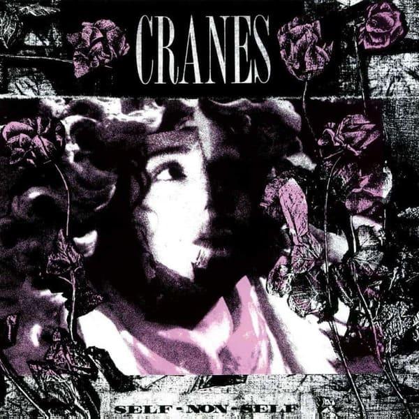 Self Non-Self by Cranes