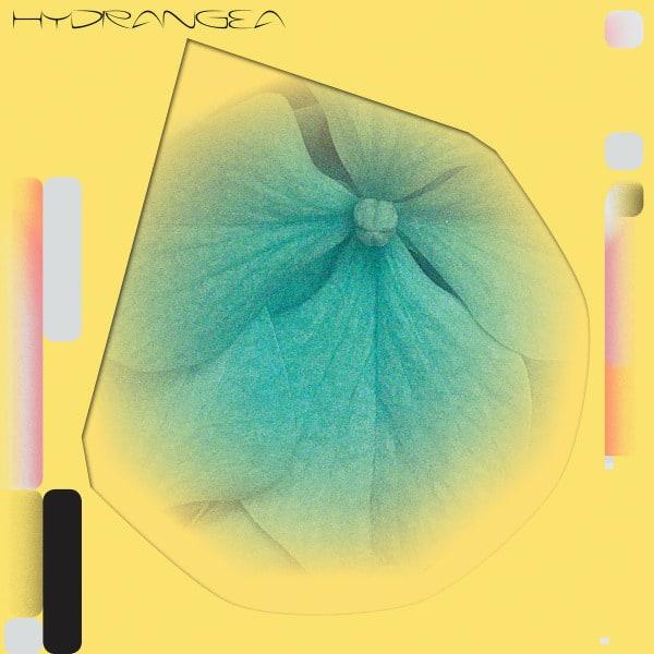 Hydrangea by Holly Childs & Gediminas Žygus