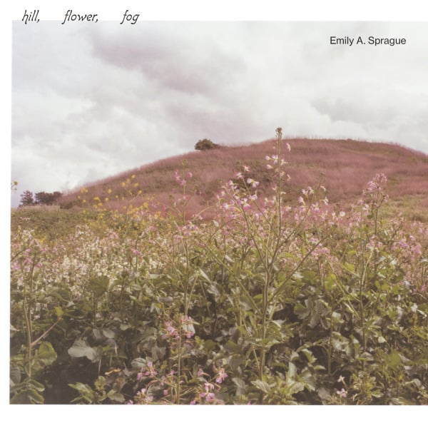 Hill, Flower, Fog by Emily A. Sprague