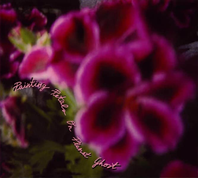 Fallen Camelias by Painting Petals On Planet Ghost