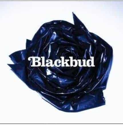 Blackbud by Blackbud