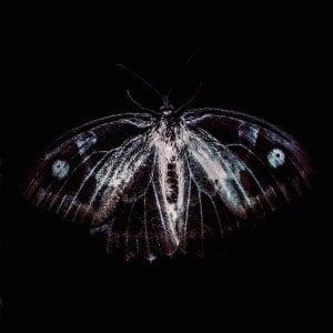 'Bestia IRE' by Niblock, Vigroux & Toeplitz