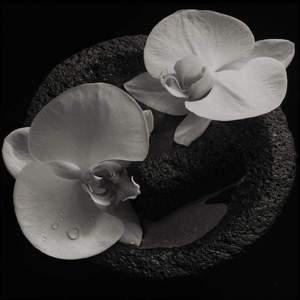 'Corpse Flower' by Mike Patton & Jean-Claude Vannier