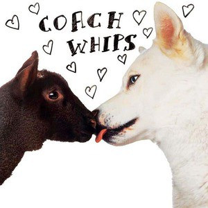 'Bangers Vs Fuckers' by Coachwhips