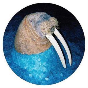 'The Walrus EP' by Tross