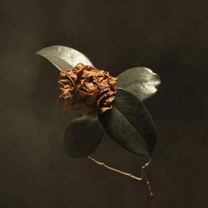 'Young Sick Camellia' by St. Paul & The Broken Bones