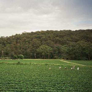'Healesville' by Albrecht La'Brooy
