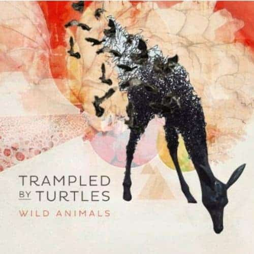 'Wild Animals' by Trampled by Turtles