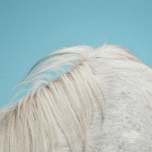 'All Yours' by Widowspeak