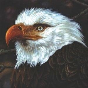 'The Hawk Is Howling' by Mogwai