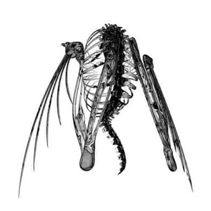 'Heterocetera' by Lotic