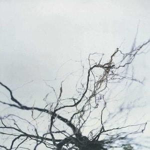 'Nova + 4' by Yutaka Hirose