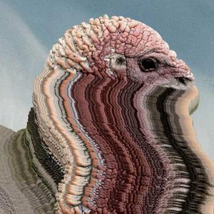 'Bird Brains' by Holy Fuck