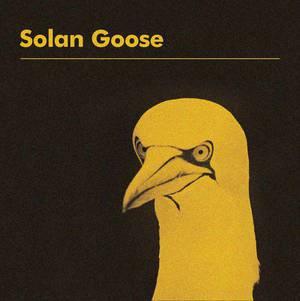 'Solan Goose' by Erland Cooper