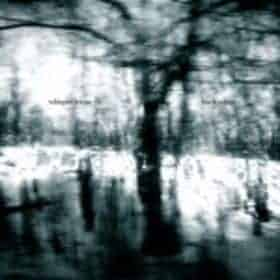 Birch White by Whisper Room
