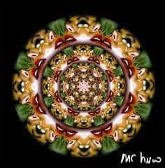 Gwyneb Dod/ Morgi Mawr Gwyn by Mr Huw